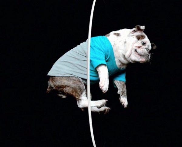 capture dog1